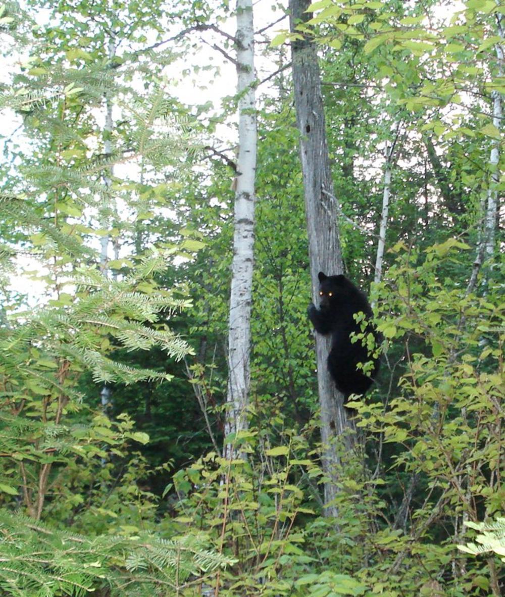 bear 2_1125x1330.jpg