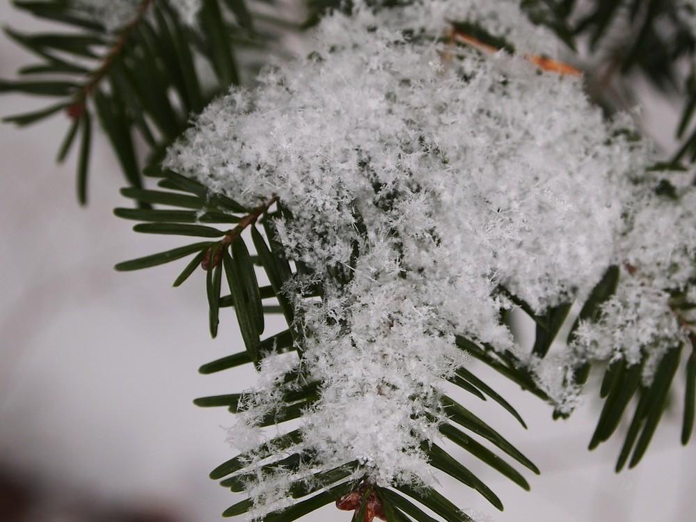 Jan 20 snow2.jpg