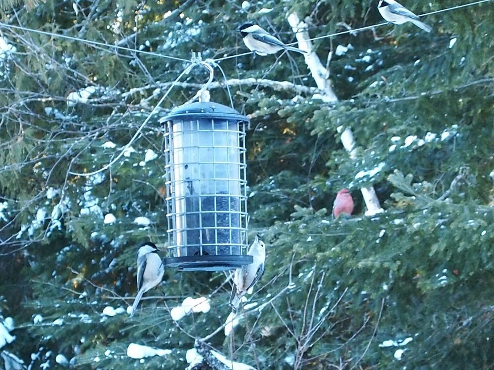 birds_Feb8.jpg