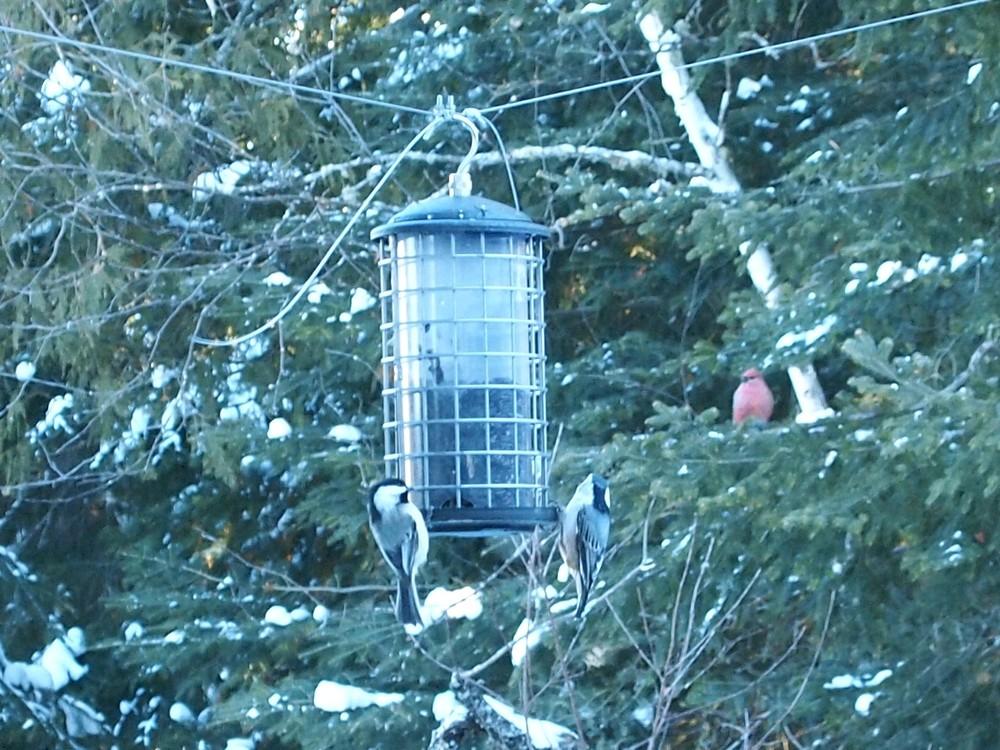 birds2_Feb8.jpg