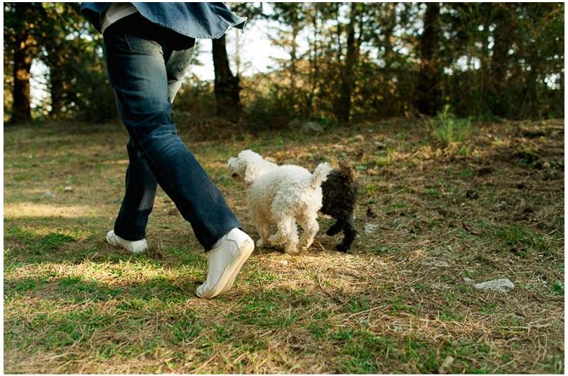 sesiones de novios con perros (1).jpg