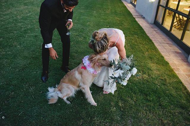 Compartir la vida con toda la familia 🐶❤️. . . . . . #bodas #bodas2018 #bodasoriginales #tendenciasdebodas #Momentos_Imperfectos