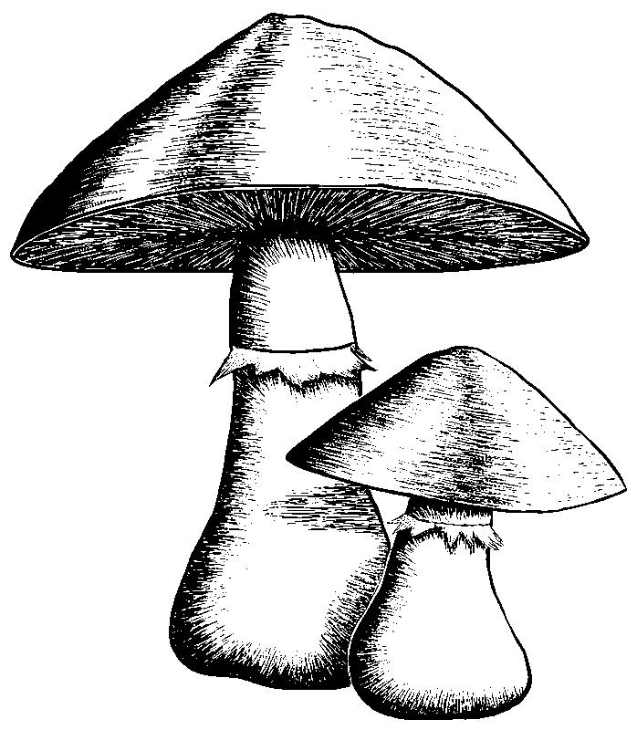 Cave Musrooms