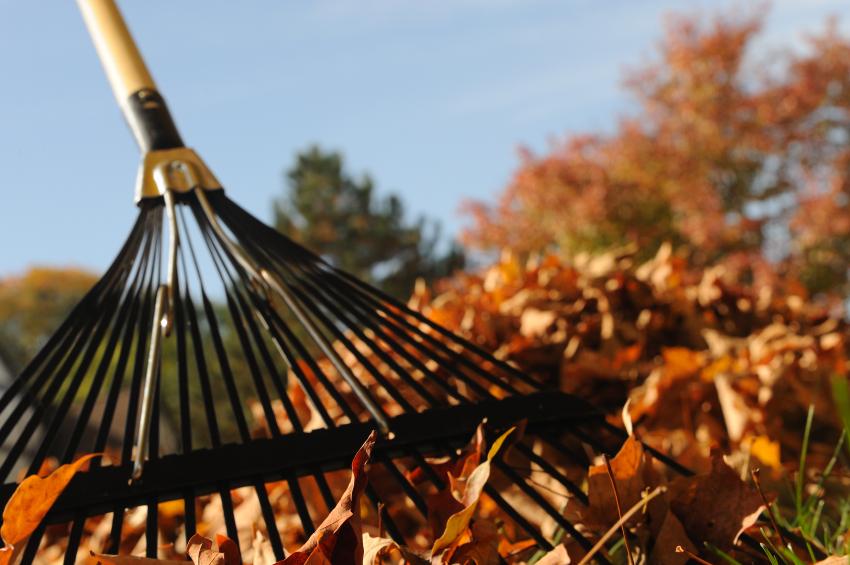 rake-leaves.jpg