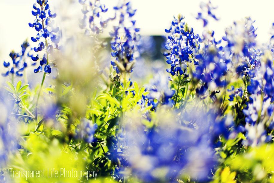 2013-bluebonnets-forblog-02.jpg