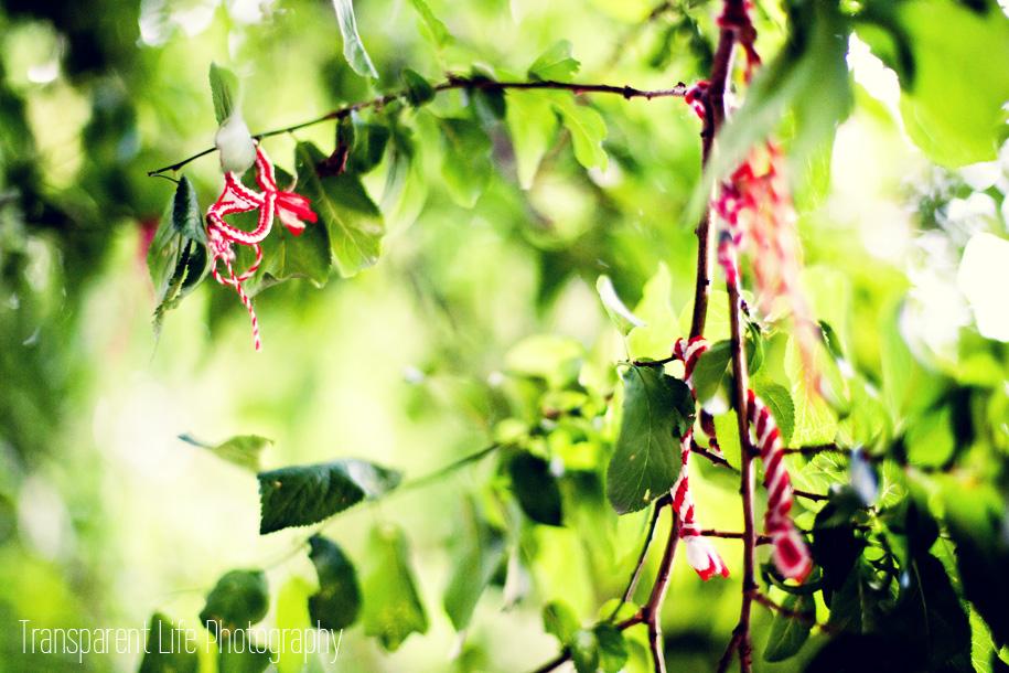 2014.08.17-photoaday.jpg