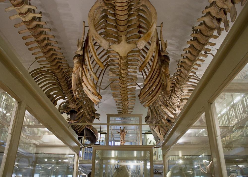 harvard museum of natural history.jpg