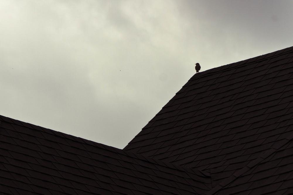 bird on roof.jpg