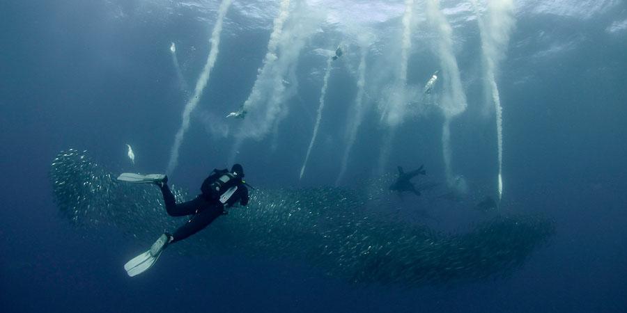 sardine+run+south+africa-07.jpg