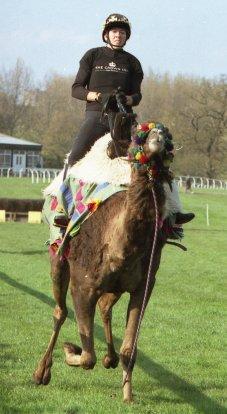 camel race 1.jpg