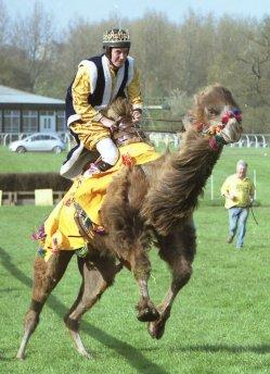 camel race 2.jpg