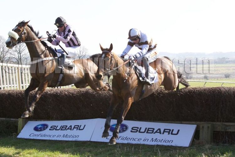 Galros Lady (right) and Ballyboker Boy