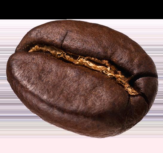 A single coffee bean