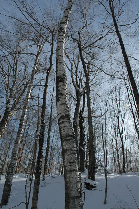 Vermont_041.jpg