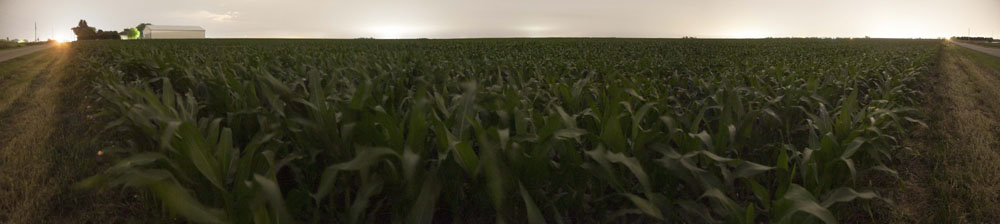 CornfieldPanoramic.jpg
