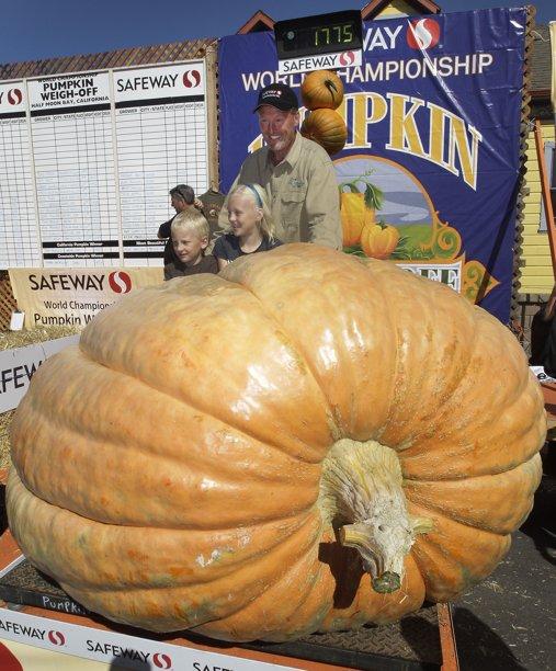 Marvel at Thad's massive pumpkin!