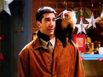 39. In Friends, Ross had pet capuchin monkey, what was it's name? Marcel