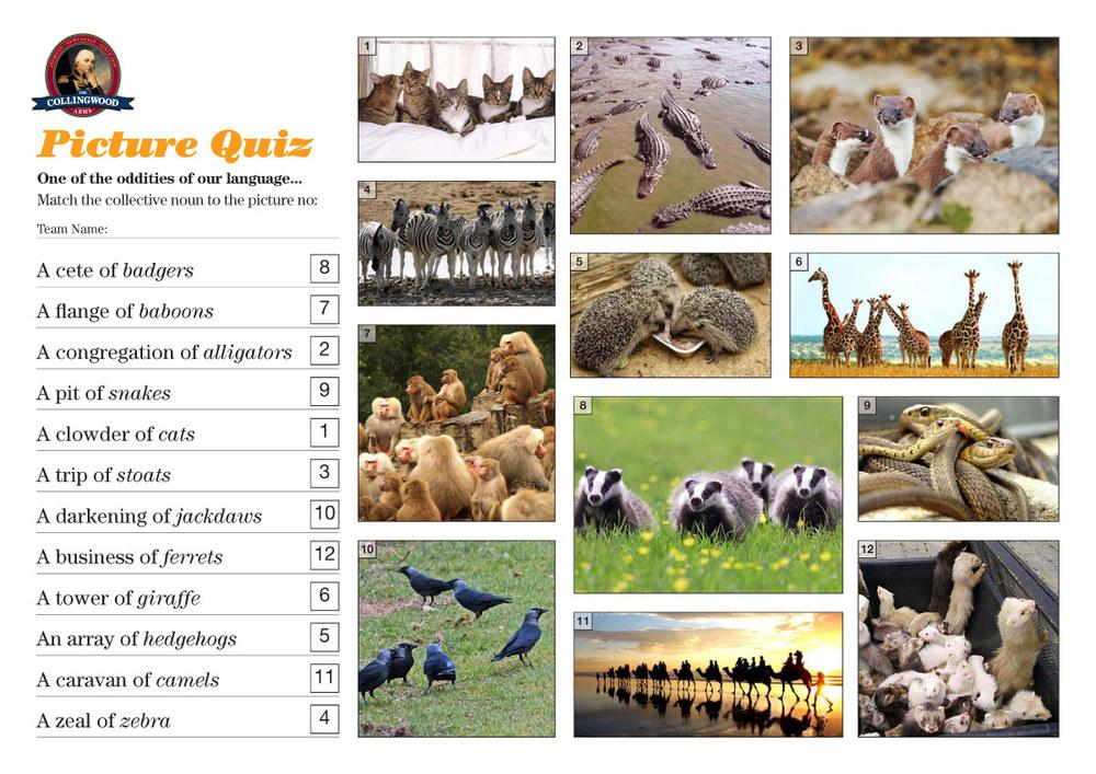Quiz-72-–-Collective-Nouns-2.jpg