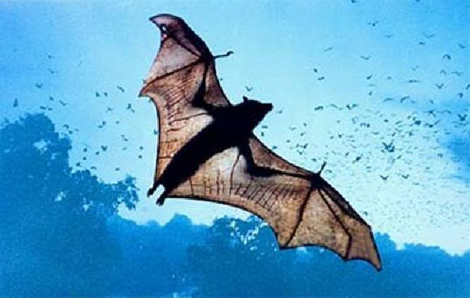 Q5 What name is given to flying animals of the order Chiroptera? Bats