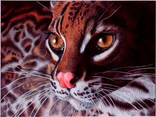 Q6 What sort of creature is a margay? A cat native to the americas