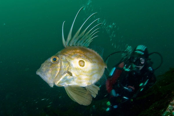 Q3 A John Dory is what kind of animal? A fish