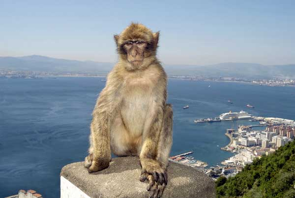 Q2 In which part of Europe are the only wild primates found (aside from humans of course)? Gibraltar has a wild population of some 300 Barbary macaques