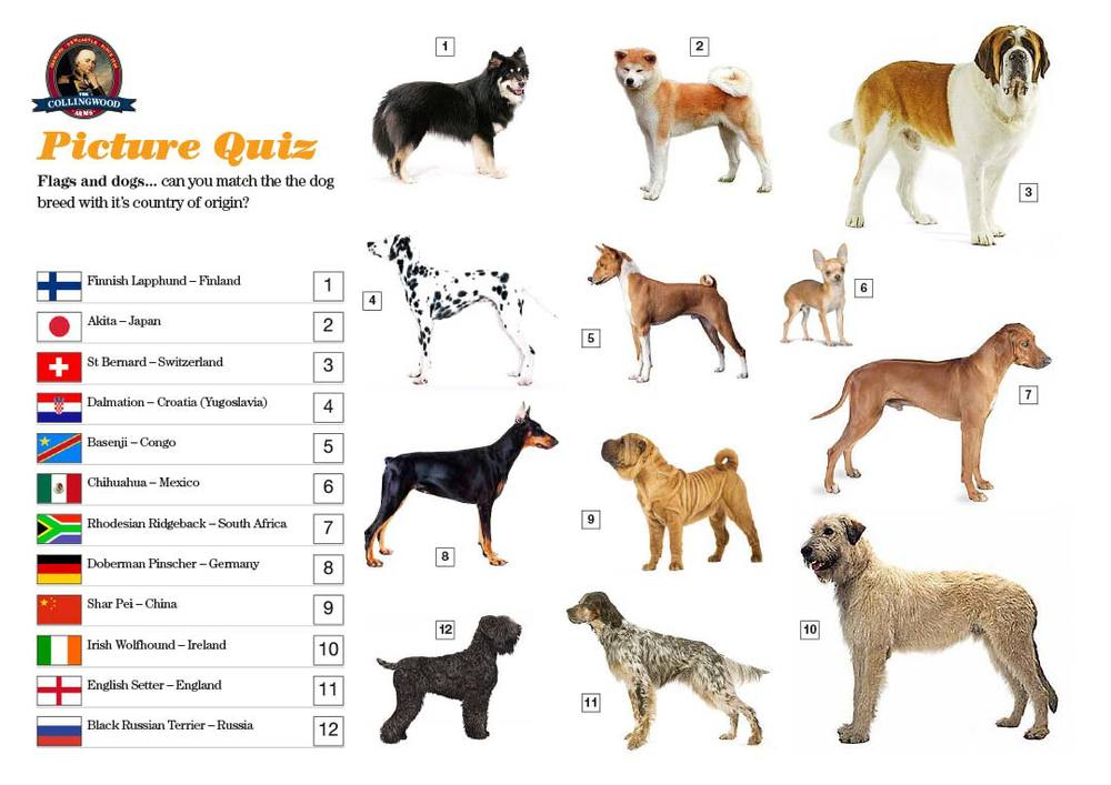 Most teams didn't do great in the Picture Round, watching Crufts was obviously not high on their TV agenda!