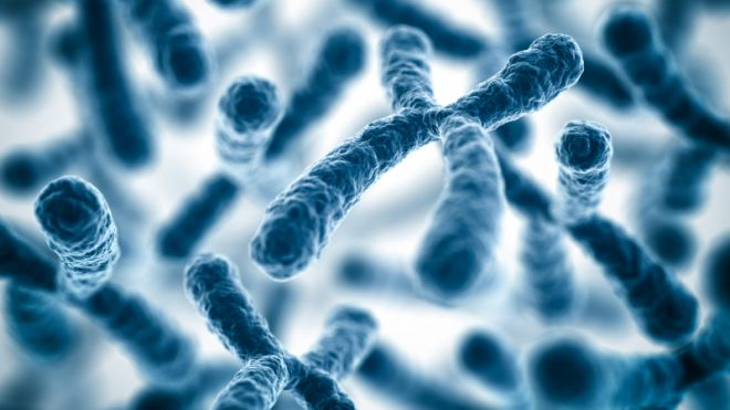 Q07. How many pairs of chromosomes does a human being normally have in each cell? 23