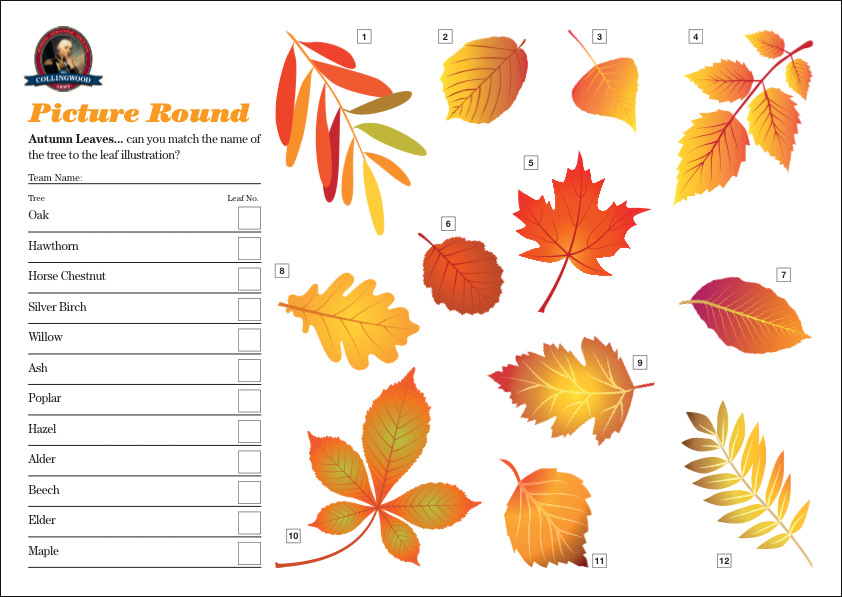 """The clue for the Picture Round on the  Quiz Preview  this week was """"Subtle shaped differences leaves Quizzers shades of autumnal red""""."""