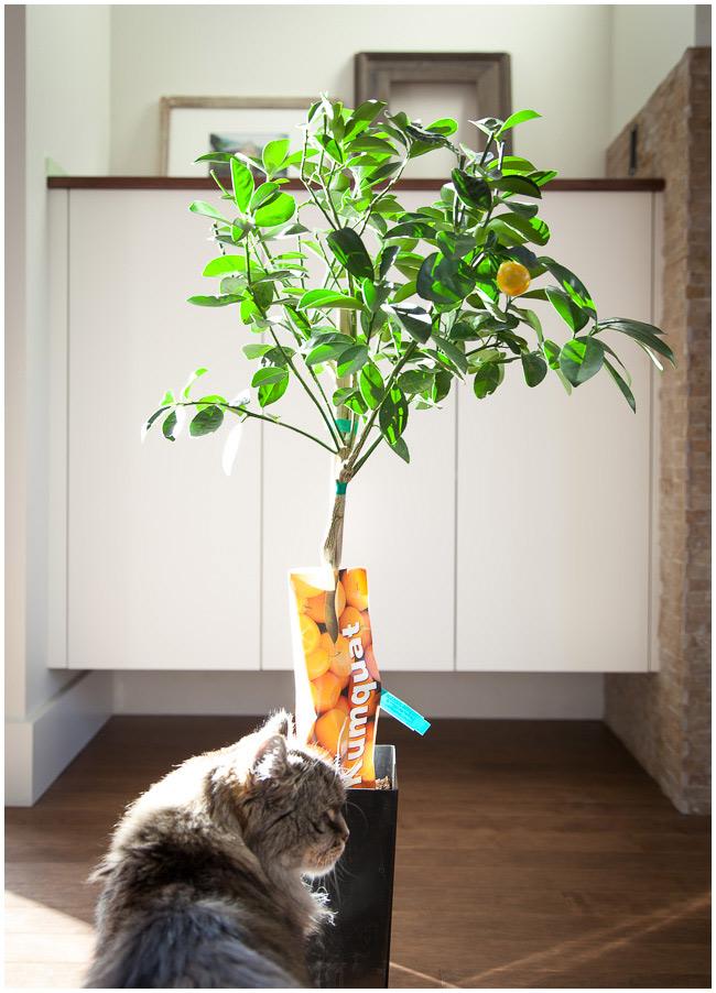 tree-6893-web.jpg