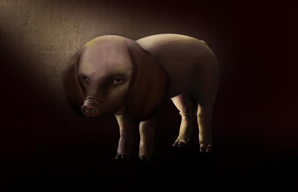 The Pigdog