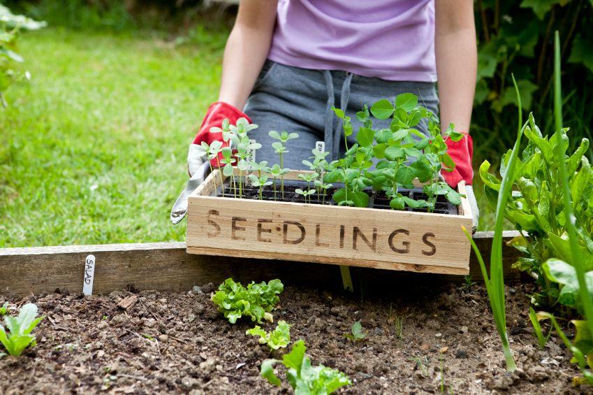 planting-a-garden-thesurvivalgirl.jpg