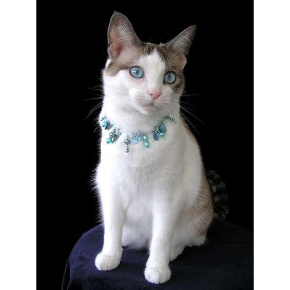 beaded glassy kitty collar matches ice blue eyes.