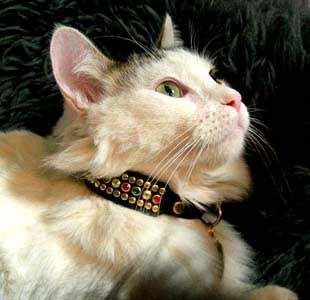 regent_multi_cat_xl.jpg