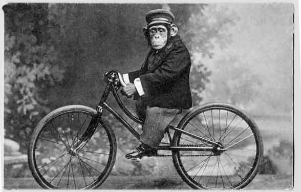 Monkey on a bicycle. vintage black and white postcard