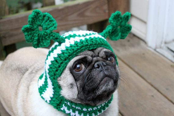 Pickles feels pretty silly, but then everybody's Irish on St. Patricks Day, even Pugs