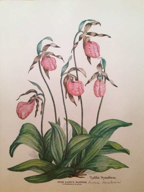 Artist: Nellie Meadows, 1973 - Pink Lady Slippers