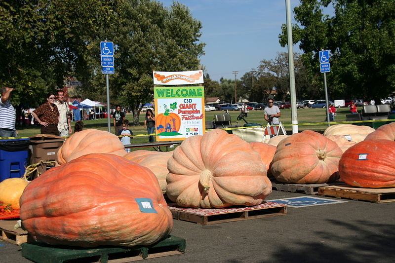 Giant pumpkin festival.  Wikimedia Commons, yourcsd, Creative Commons.