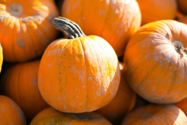 Pumpkins - Pepitas -- Sarah Crowder Photography 2012 ©