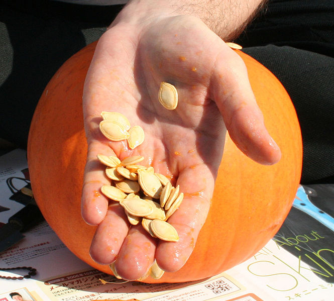 Pumpkin seeds - Pepitas -- Creative Commons, Wikimedia Commons