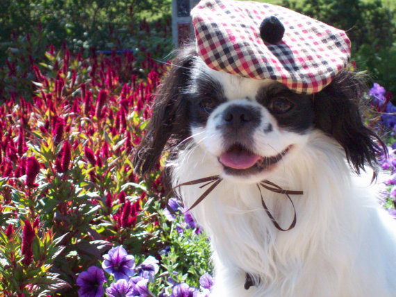This one is simple, easy to wear and looks great on a small dog. Call it a Scottish Tam or French beret, it makes a perfect Halloween costume . Ties under the chin with a bow, it's lightweight, looks cute and doesn't annoy the dog. What could be better?