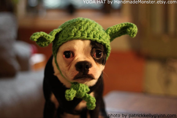 May the Force be with you, young one. This dog really does look like Yoda, doesn't he? Well, at least he looks wise. A Yoda hat makes a great Halloween costume and conversation starter