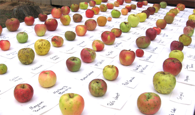 Table of apple varieties from Century Farm Orchards