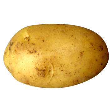 Common potato