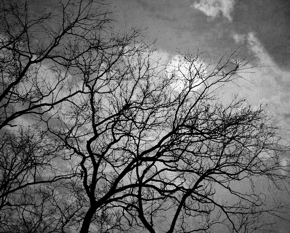 "You can purchase fabulous photographs like these from artists/photographers at places like Etsy.  Take this ""Halloween Moon Photography 8x10, Black and White Night Sky Print, Surreal Tree Photo, Spooky Wall Art, Titanium Gray Decor"".  Photographers like  Elizabeth Urquhart  will offer any print in a variety of sizes, including 20x30."