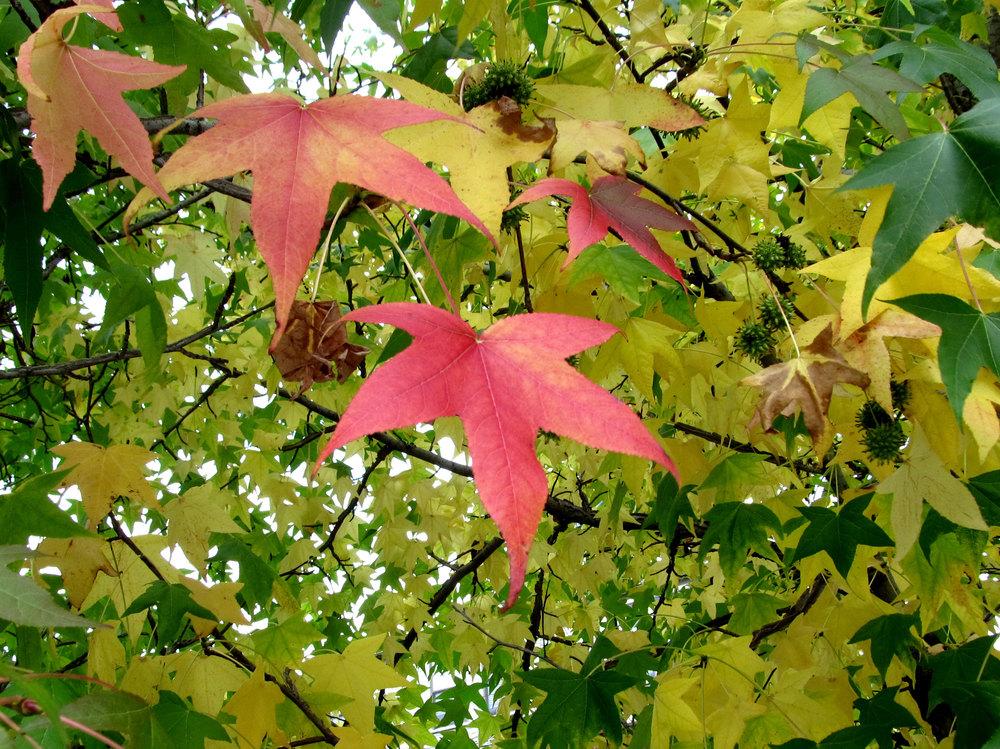 bright_leaf.jpg