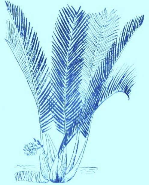N  ipa Palm,  Source: Original Art - Owner: Jerilee Wei