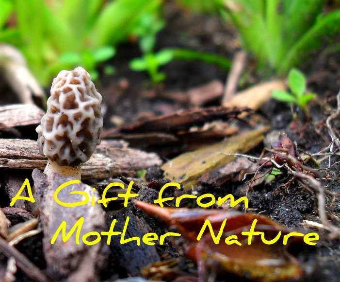 A Gift From Mother Nature Mushroom Photo