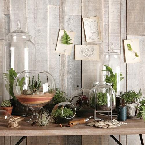 Beginning your indoor garden the pretty life - Pretty indoor plants ...