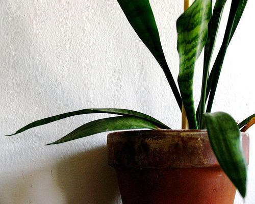 Indoor house plant placement and care